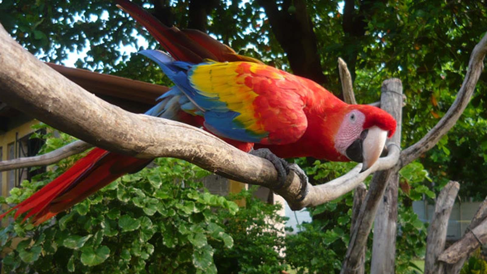 Papagayo Jungle Tours
