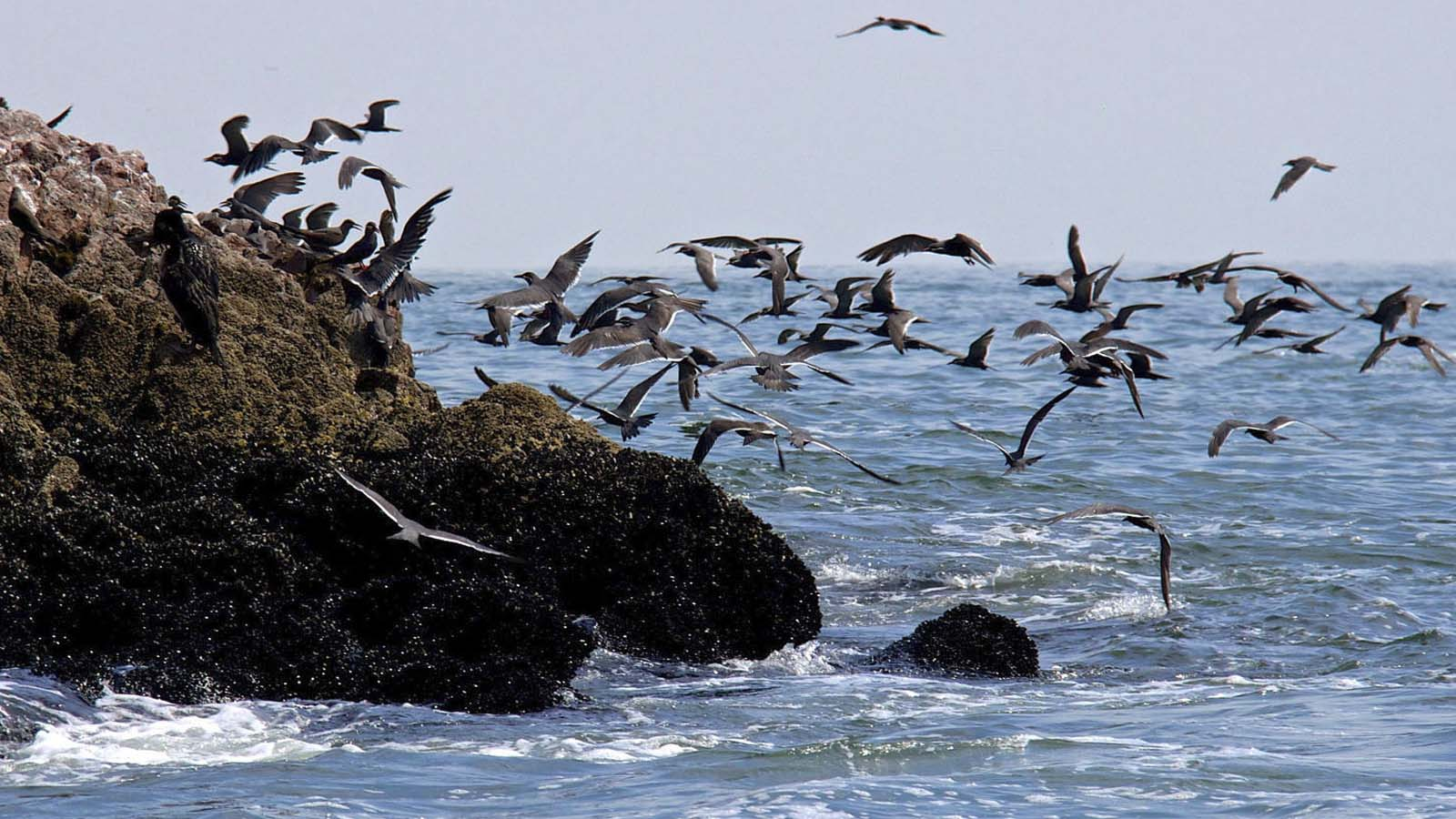 Foto 1 de Ballestas Islands and Paracas Reserve full day Tour